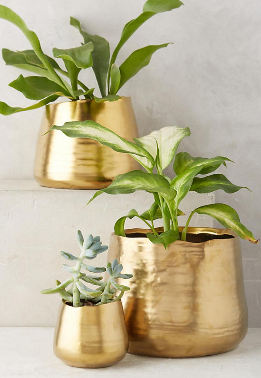 Gilded Planter anthropologie Plant decor, House plants