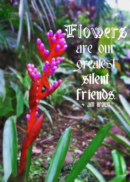 Flowers Are Our Greatest Silent Friends Flower Quotes Inspirational Flower Quotes Garden Quotes