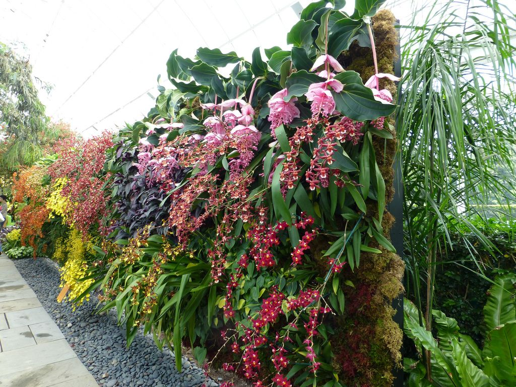 Vertical garden design with orchids space saving backyard landscaping - Orchid Show Vertical Garden Wall 2 Dancing Lady Orchids Flickr Photo Sharing
