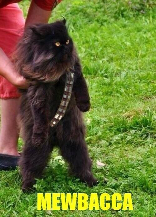 Funny Cat Star Wars Cute Animals Funny Animal Pictures Cats