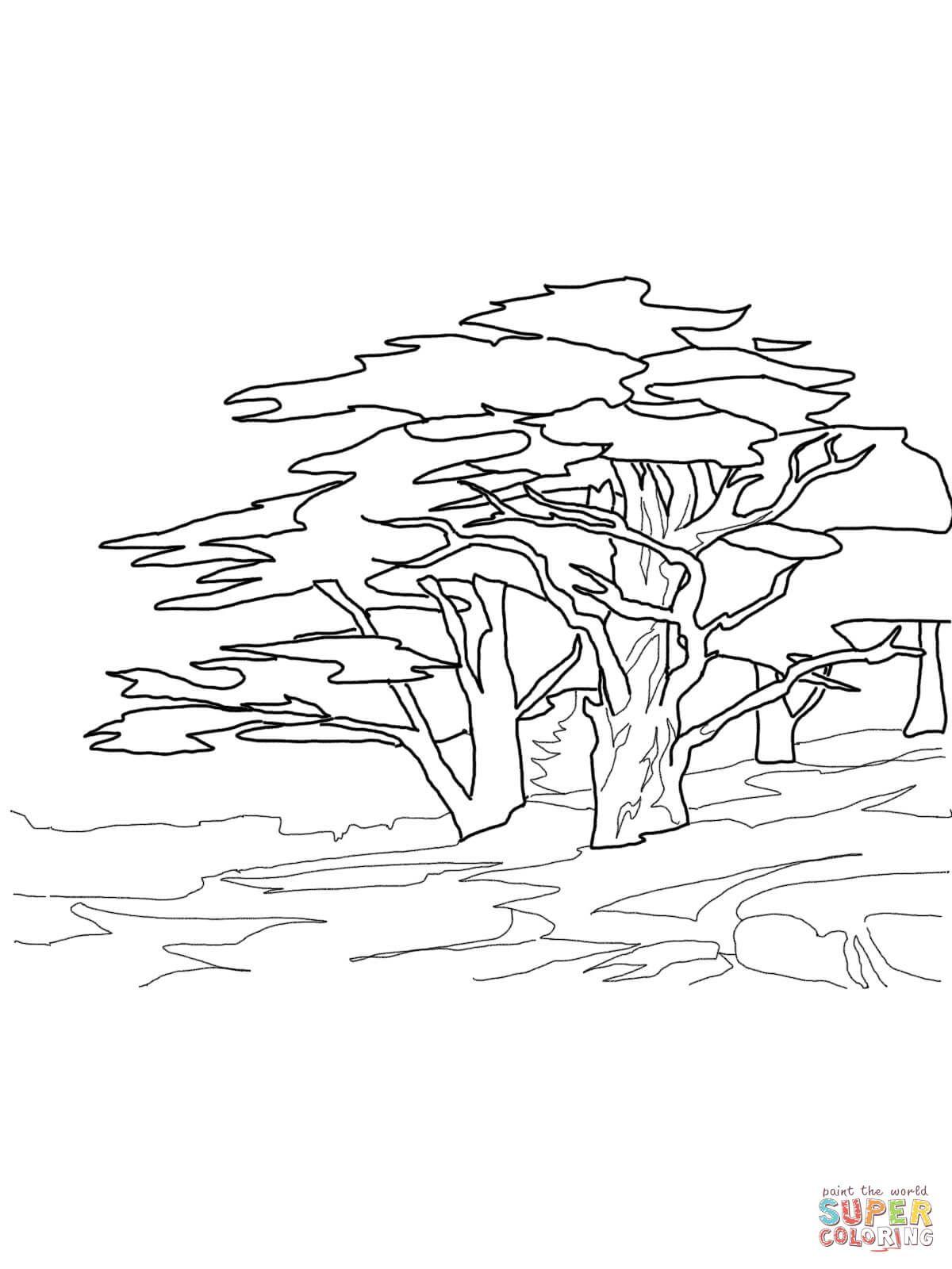 affenbrotbaum ausmalbilder #affenbrotbaum #ausmalbilder in