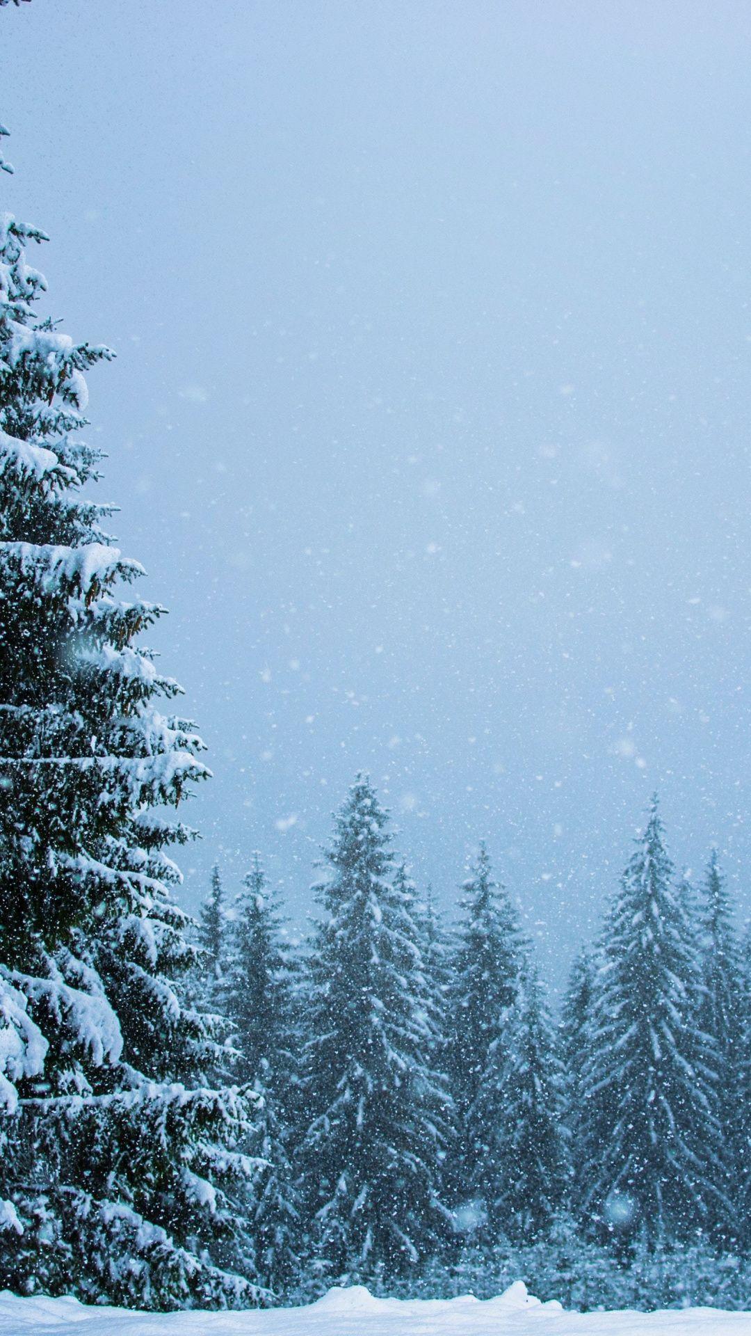 Snowfall Winter Pine Trees Nature 1080x1920 Wallpaper Mountain Wallpaper Wallpaper Desktop Wallpaper