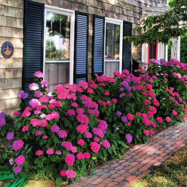 Top 32 Diy Fun Landscaping Ideas For Your Dream Backyard: Hydrangea Garden, Hydrangea