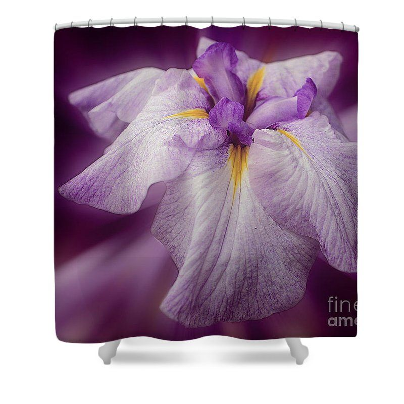 Stunning purple Japanese iris flower in full bloom shower curtain.  Photography by Susan.
