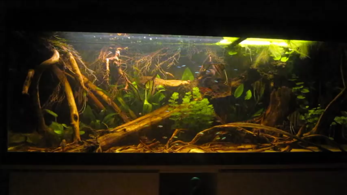 450 liter aquarium south america biotop fish tanks pinterest aquariums and fish tanks. Black Bedroom Furniture Sets. Home Design Ideas