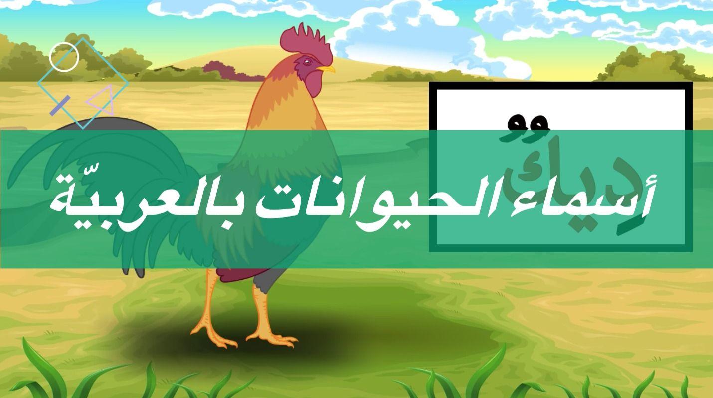 بطاقات تعليمي ة أسماء الحيوانات بالعربي ة Movie Posters Poster Art