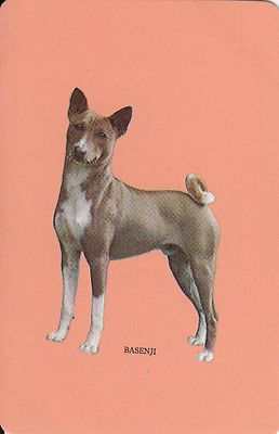 Vintage Woolworths Swap Cards 1 Single Apricot 'Basenji' DOG | eBay