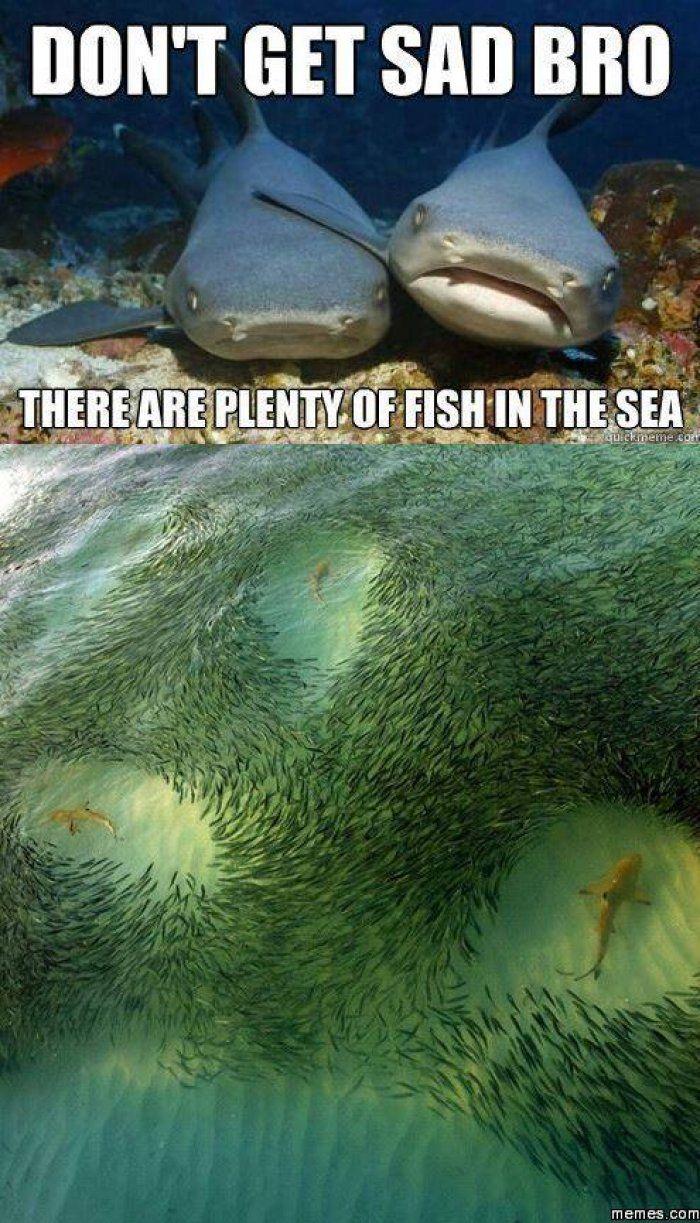 4b3538cbd8e0aeeb865f8dbc4c45b879 plenty of fish in the sea www jokideo com cute, funny
