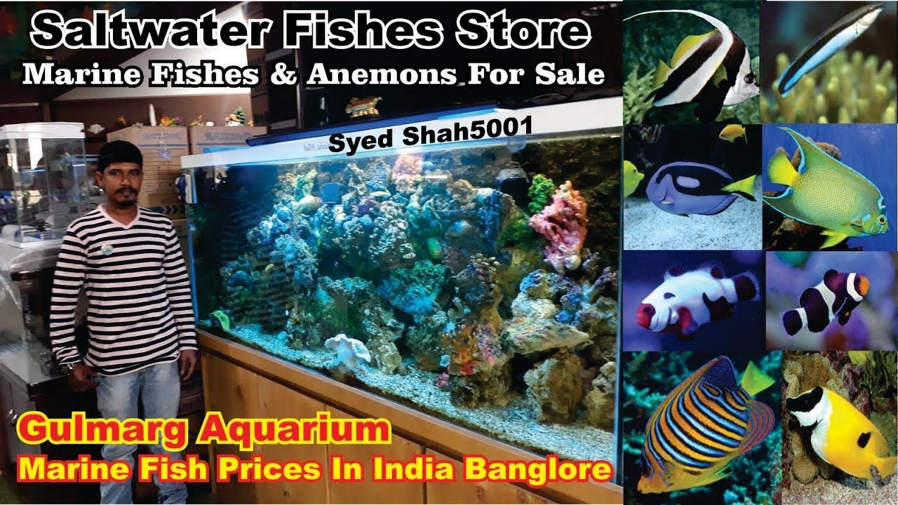 Marine Fish Aquarium Shop Banglore Gulmarg Aquarium Salt Water Fish In Marine Fish Aquarium Shop Aquarium Fish