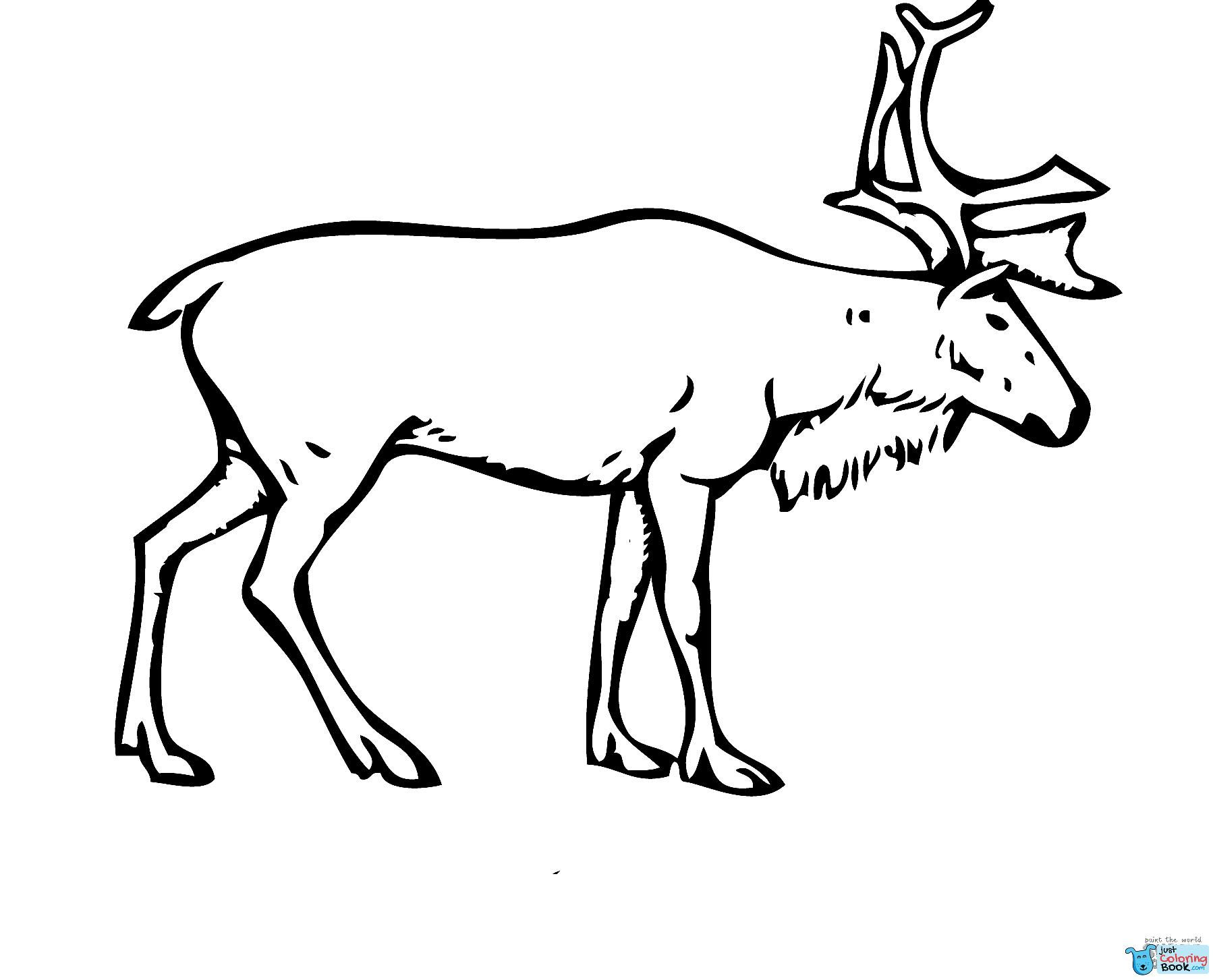 Swedish Reindeer Coloring Page Free Printable Coloring Pages Throughout Download Printable Swedish Re Deer Coloring Pages Coloring Pages Animal Coloring Pages