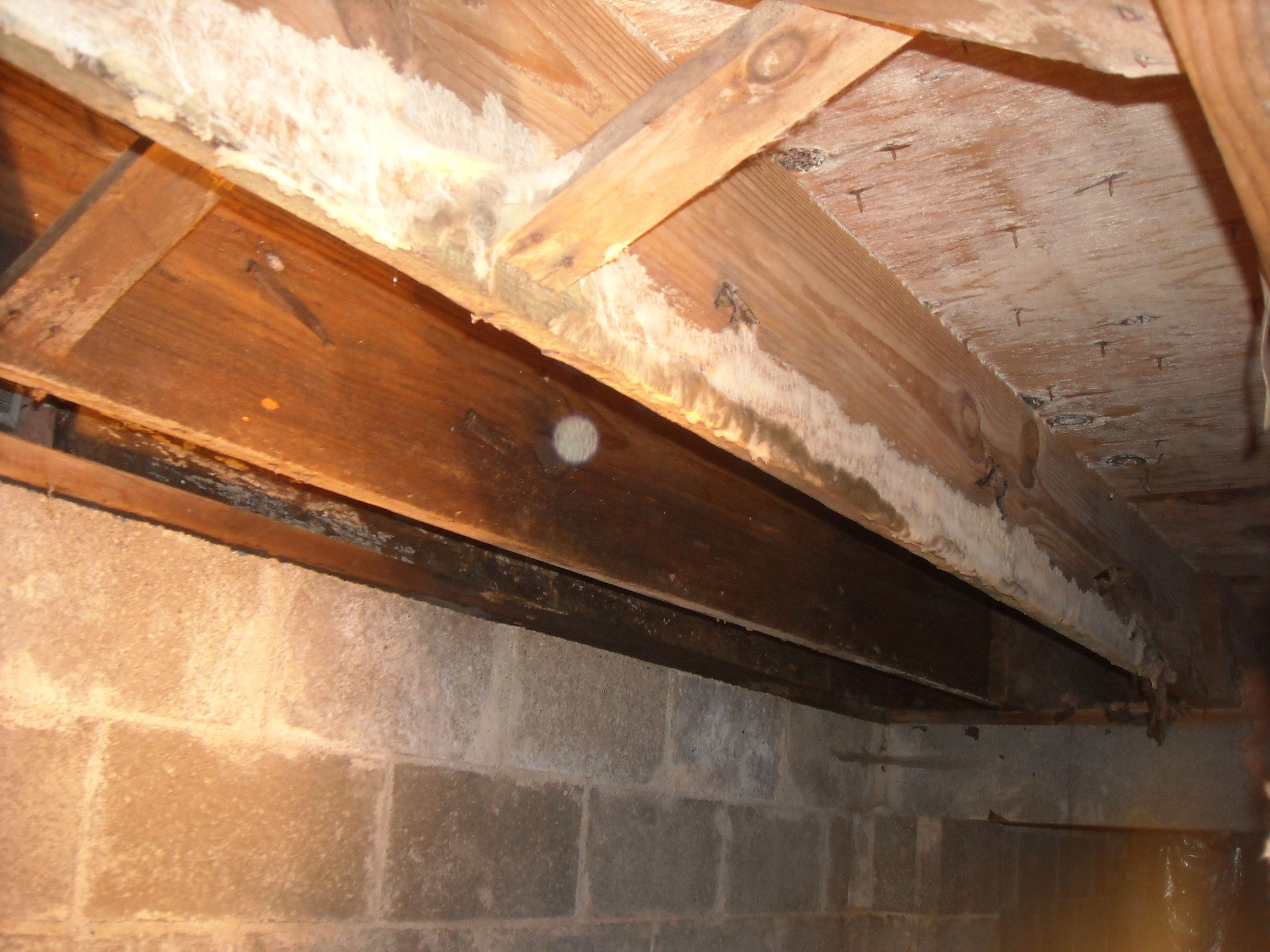 White Mold On Floor Joists In Crawlspace Before Removal Http