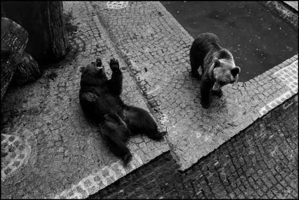 PARIS—Zoo de Vincennes, 1993.  © Richard Kalvar / Magnum Photos