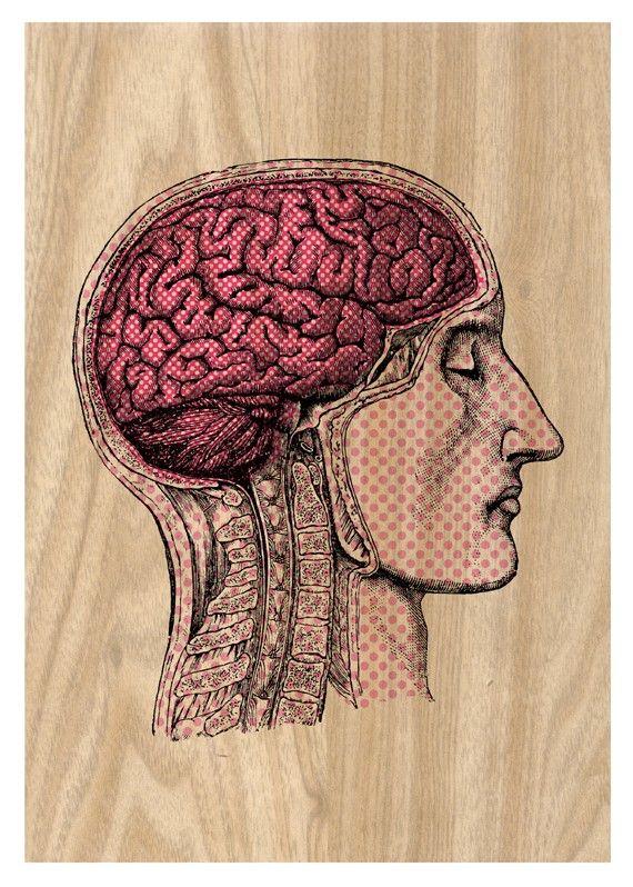anatomy | Idees | Pinterest | Anatomía, Medicina y La piel