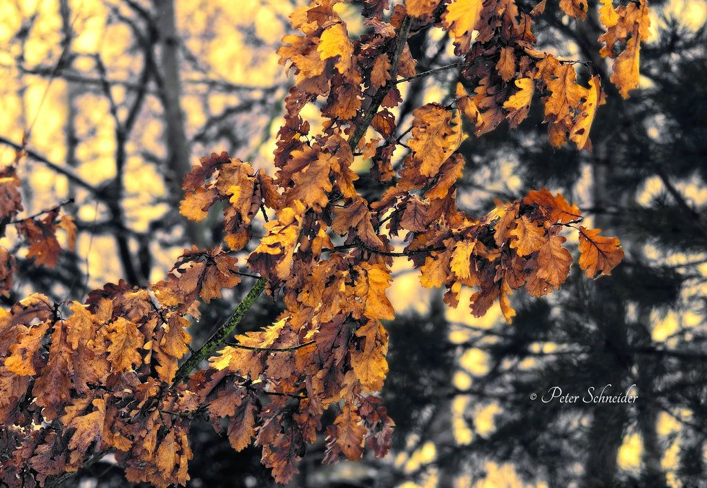 january colours. by phototubby
