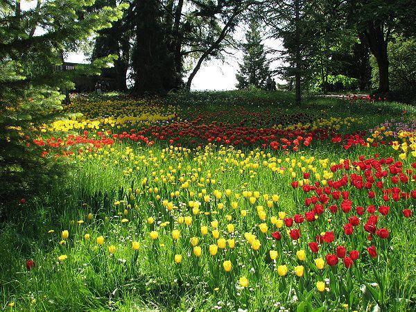 Tulpenmeer Auf Der Insel Mainau Wurde In Deutschland Konstanz Aufgenommen Und Hat Folgende Stichworter Fruhling Tulpen Mainau Insel Mainau Insel Tulpen