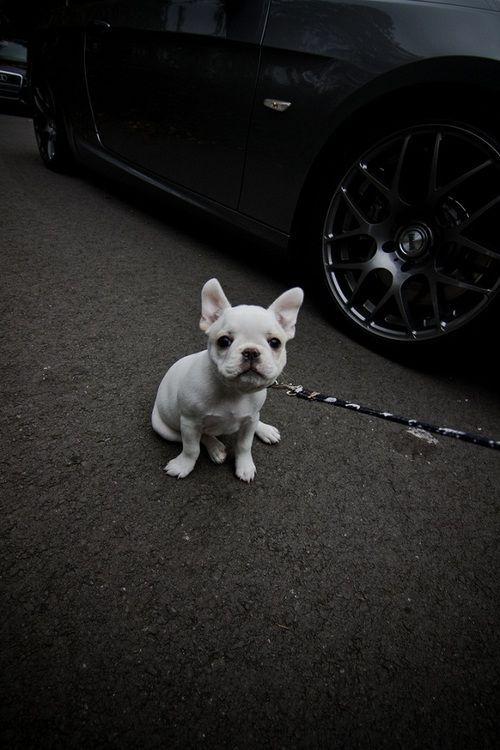cão bebe