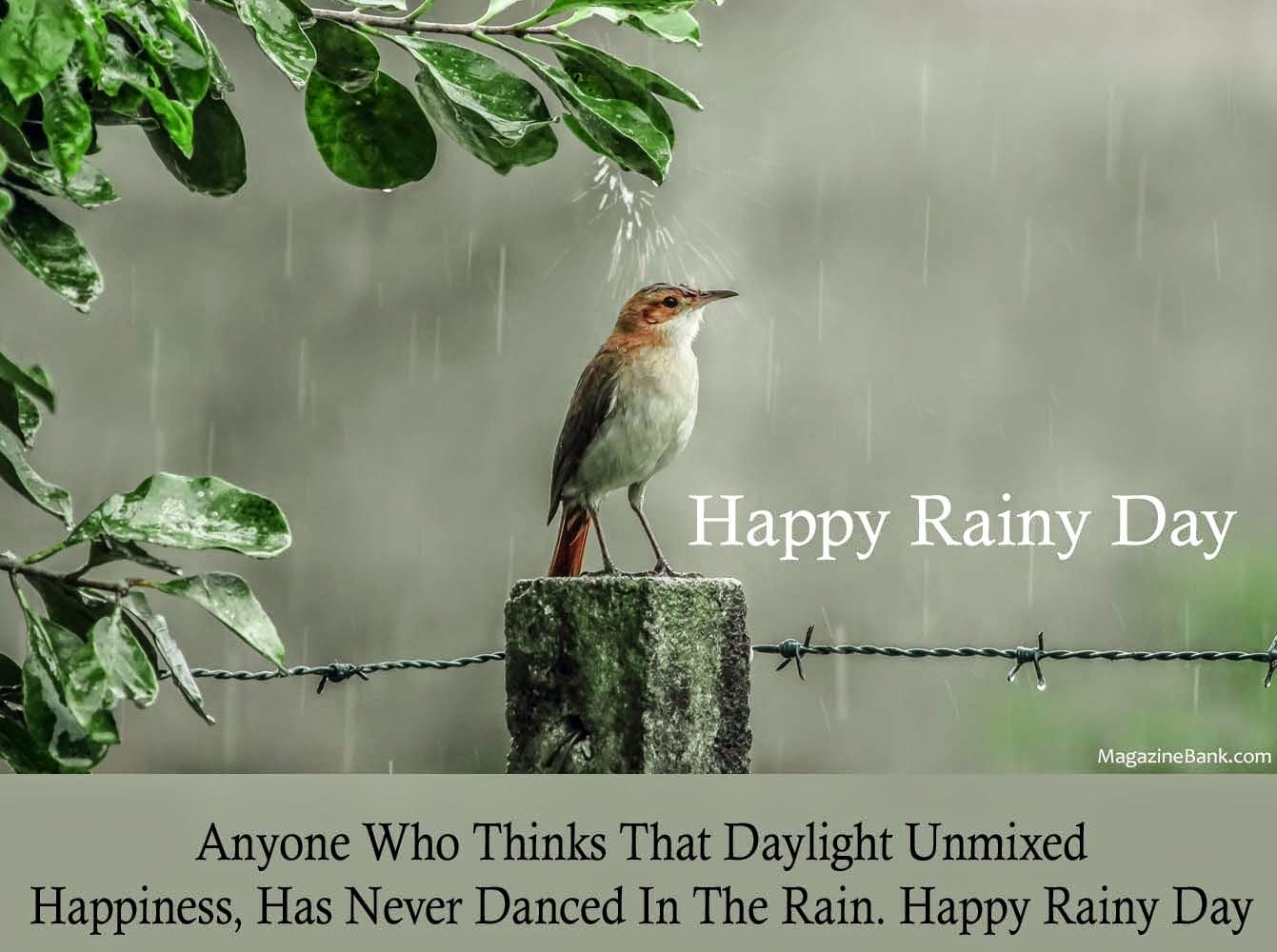 Happy Rainy Day Qoutes With Latest Pictures For Lover Sms Wishes