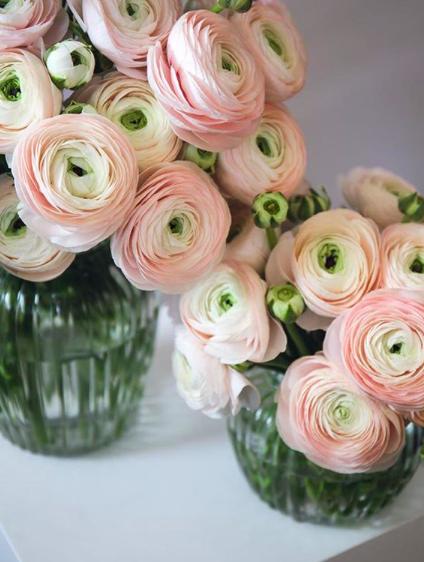 Flowerbx Ballet Slipper Ranunculus Luxury Flower Arrangement Luxury Flowers Flower Delivery