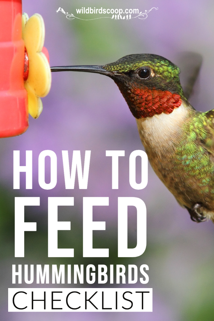 How To Feed Hummingbirds With A 15 Tip Checklist In 2020 Feed Hummingbirds Humming Bird Feeders Bird Feeding Station
