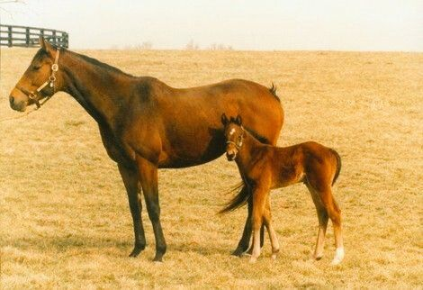Miesque: with her foal Kingmambo