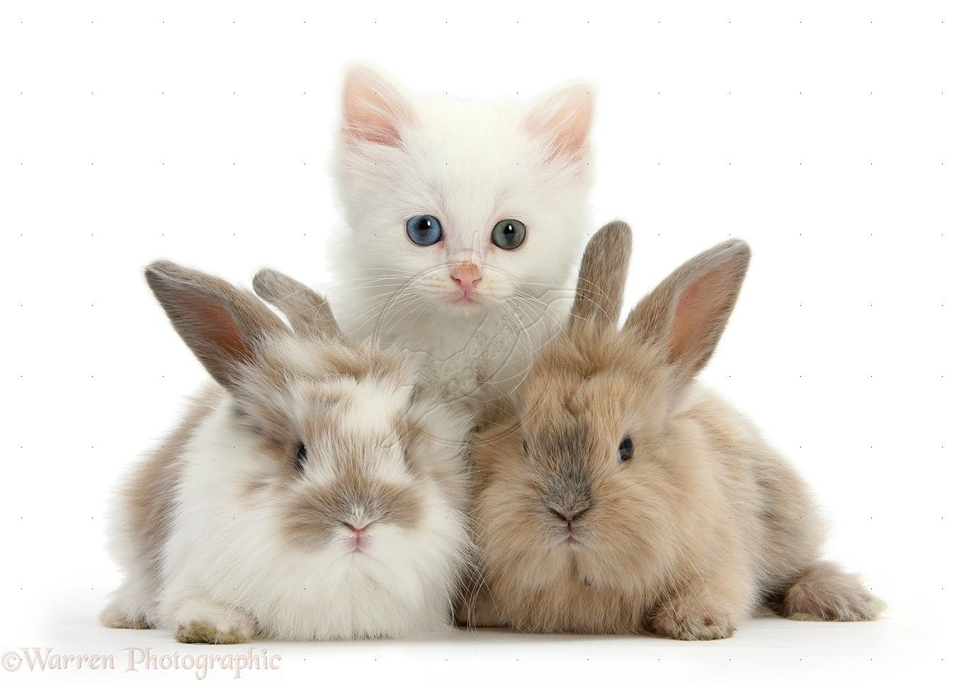 White Baby Bunnies Google Search Cute Puppies And Kittens Cute Baby Puppies Baby Cats