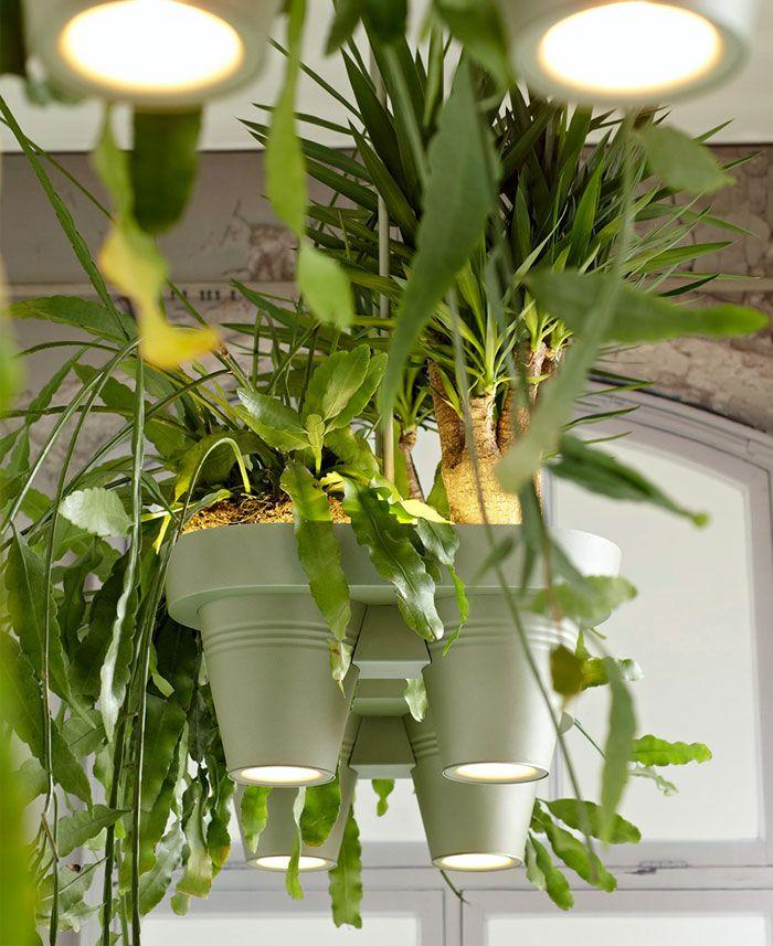 Multifunctional Lamp Brings Rainforest Home Plant Lighting