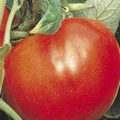 Celebrity Tomatoes Tomato Of The Month Types Of 400 x 300