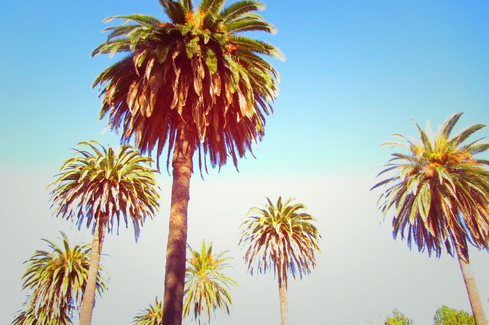 #Palms #LosAngeles #sunnyday #energy #light