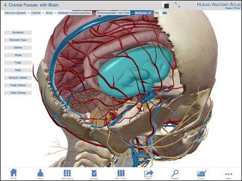 Anatomy Visible Body Human Anatomy Atlas App Artist Toolkit