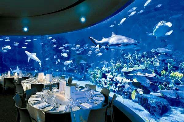 Melbourne Aquarium Weddings Aquarium Wedding Wedding Venues Melbourne Underwater Wedding