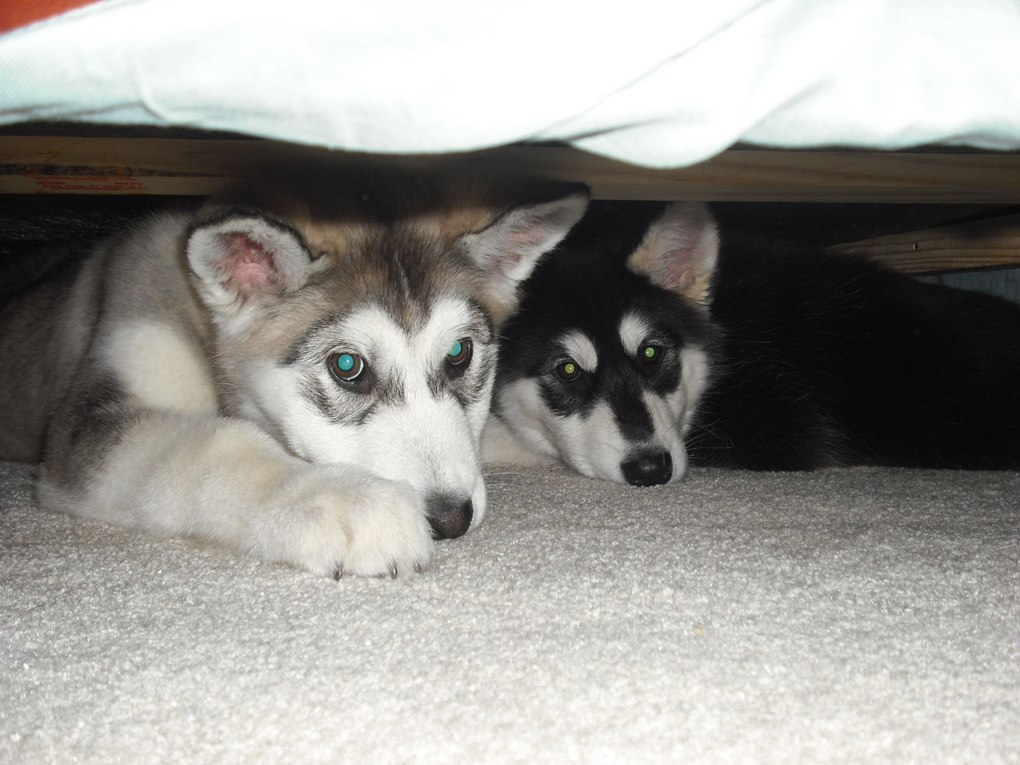 Just hanging under the bed.