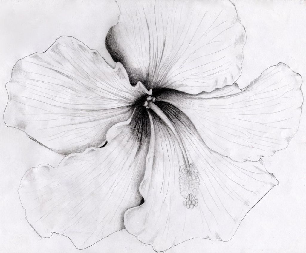 Pin By Jasmine Sylvia On Pencil Art Pinterest Flower Pencil