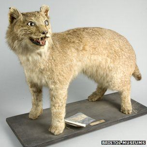 72e5132ef Big cat' was on loose in UK in 1903 | De-stress | Exotic cats, Big ...