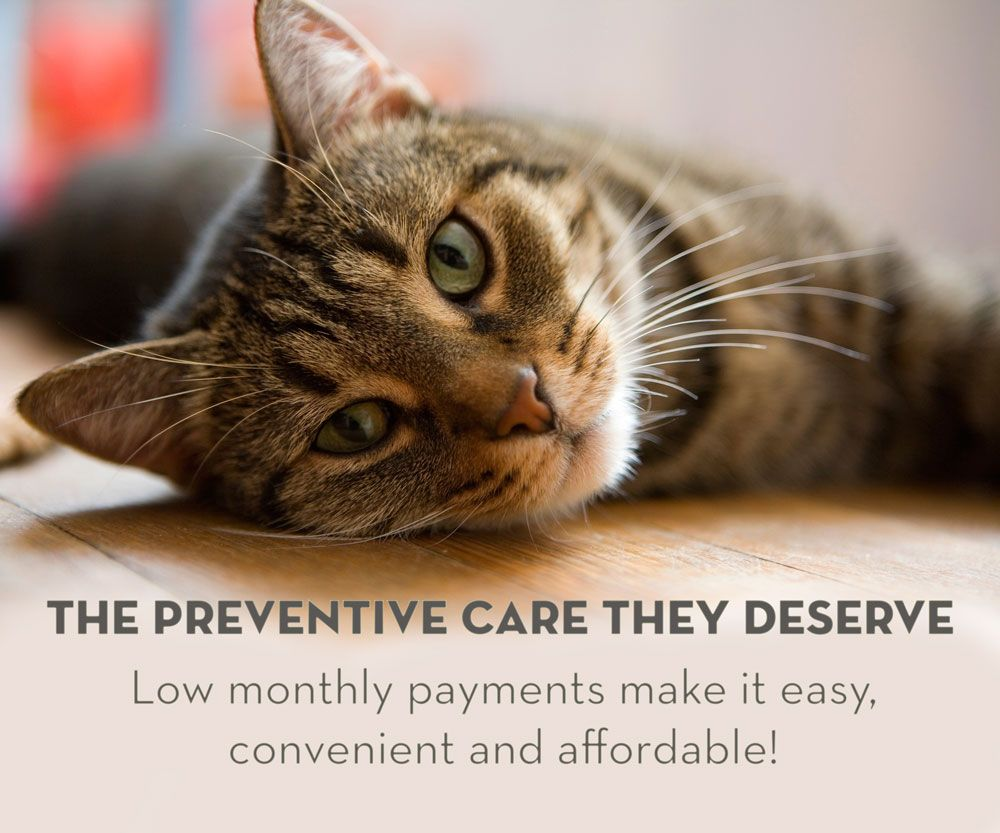 We Know Providing The Best Care Possible Can Sometimes Be A Challenge To The Wallet That S Why We Ve Launched A Preventive Care Pa Cat Illnesses Cats Sick Cat