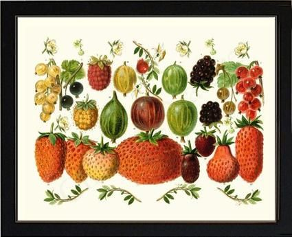 Berries Fruit Art Print  11x14 Print 11x14 Black Frame