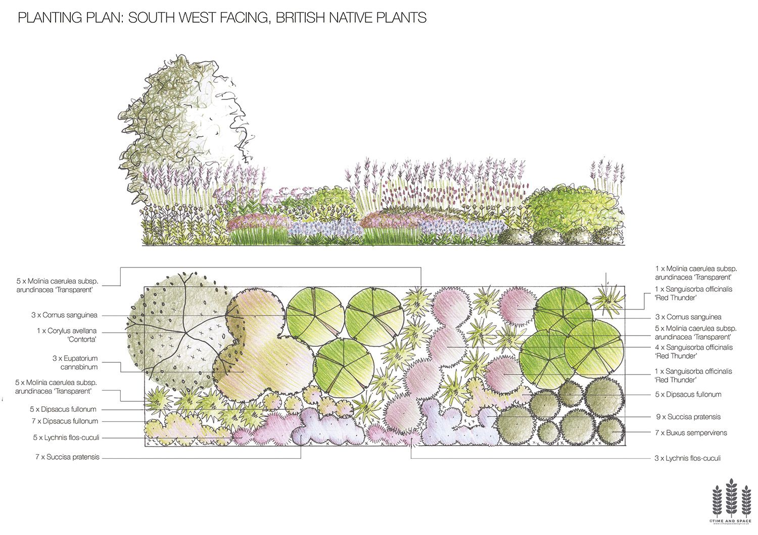 South West Facing British Native Plants FREE Planting Plan Bespoke Planting  Plans For UK Customers Reduced Until July 2016