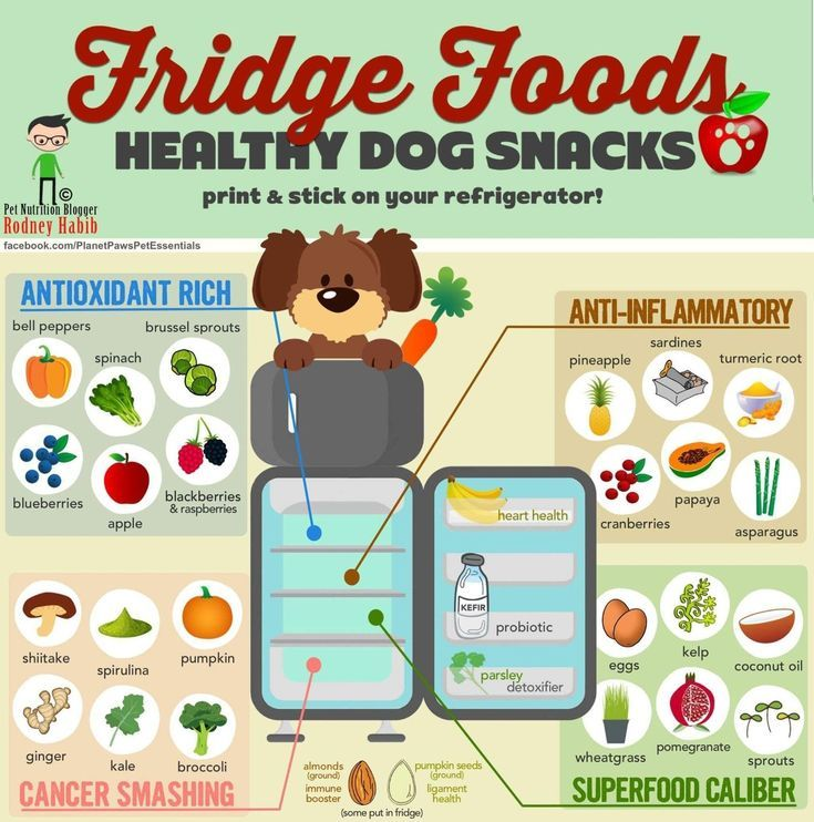 Tired Of Seeing Infographs Of Foods Your Dog Can't Eat