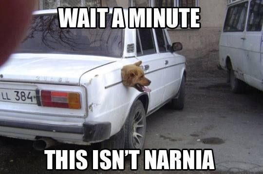 Dog looking for Narnia