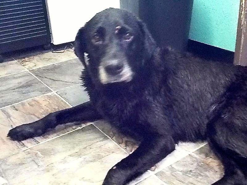 Adopt Ludo On Dog Adoption Labrador Retriever Dog Retriever Dog