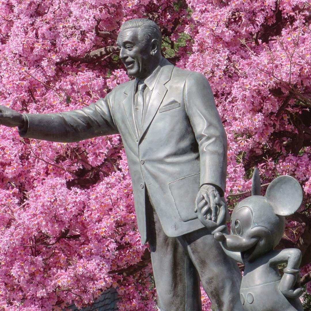 I love @Disneyland in the spring!!