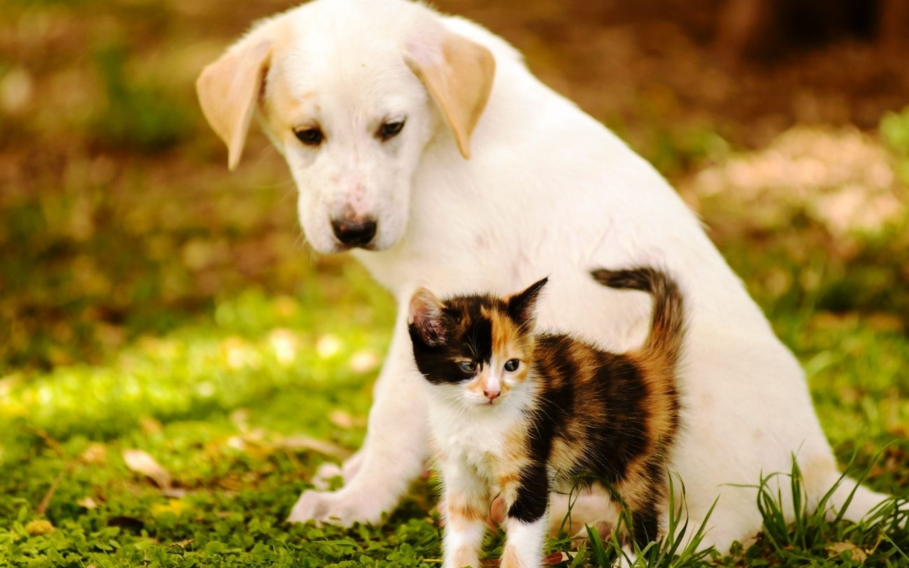 Download Beautiful Cat and Dog Wallpaper for Macbook High