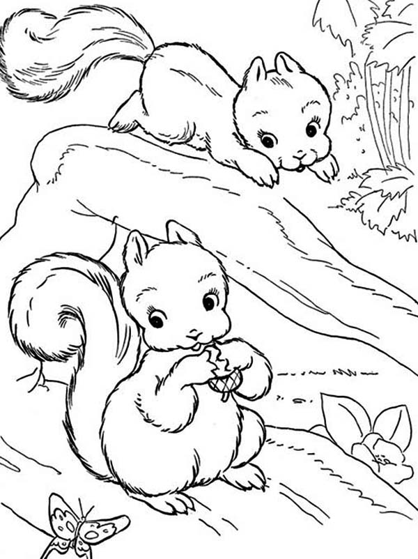 Pin On Squirrel Coloring Pages