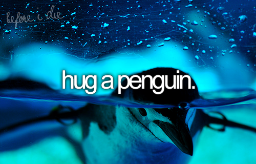 bucket list: hug a penguin...I need to share this one with my sister -- quote from my lovely sister. this is deff one to share with the one who knows me best, thanks Pauli <3