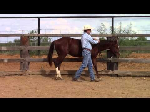 80d8fee094 Introducing Neck-Reining to a Yearling - YouTube | horses | Horse ...