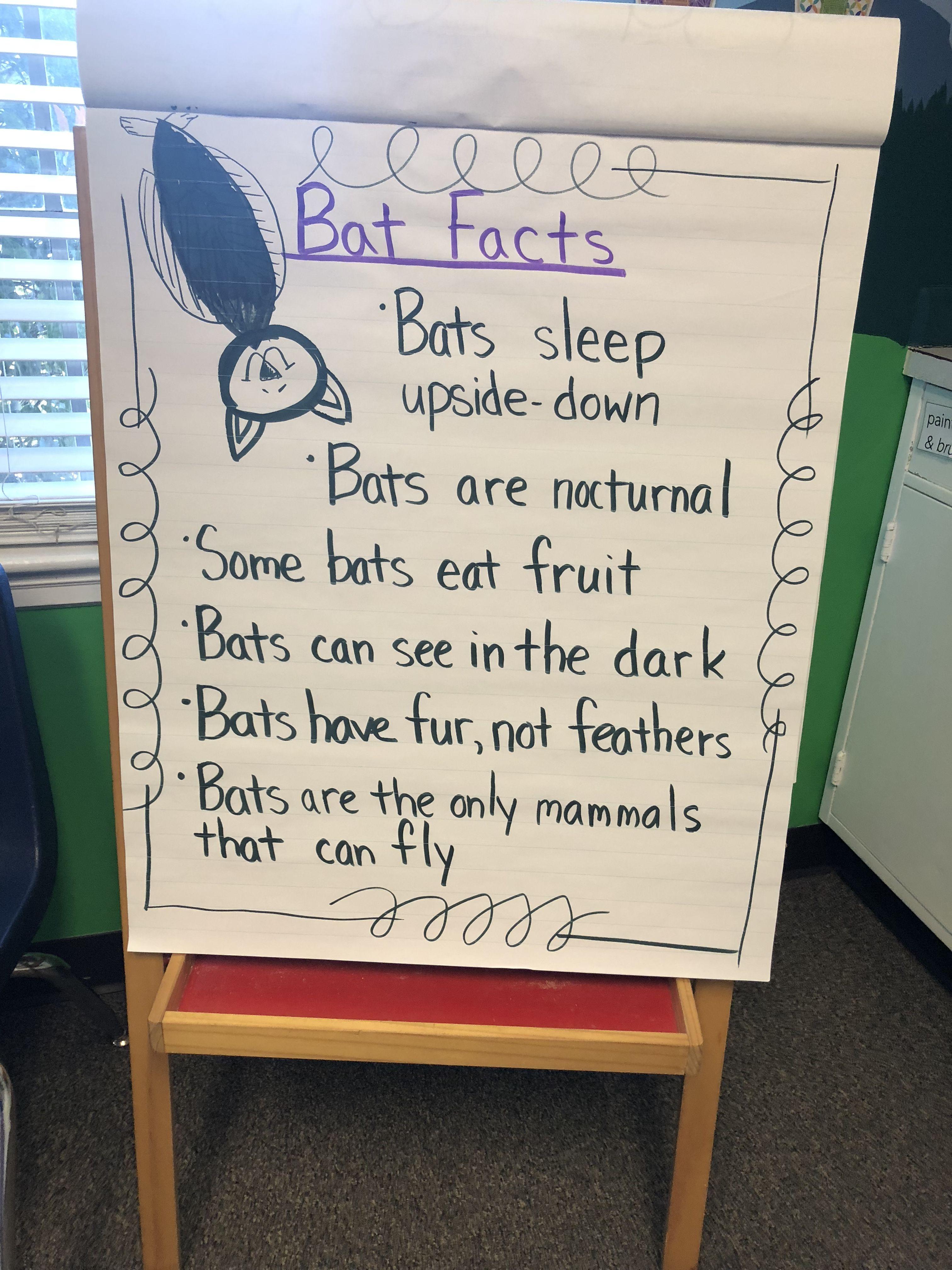 Bat Facts Anchor Chart Preschool