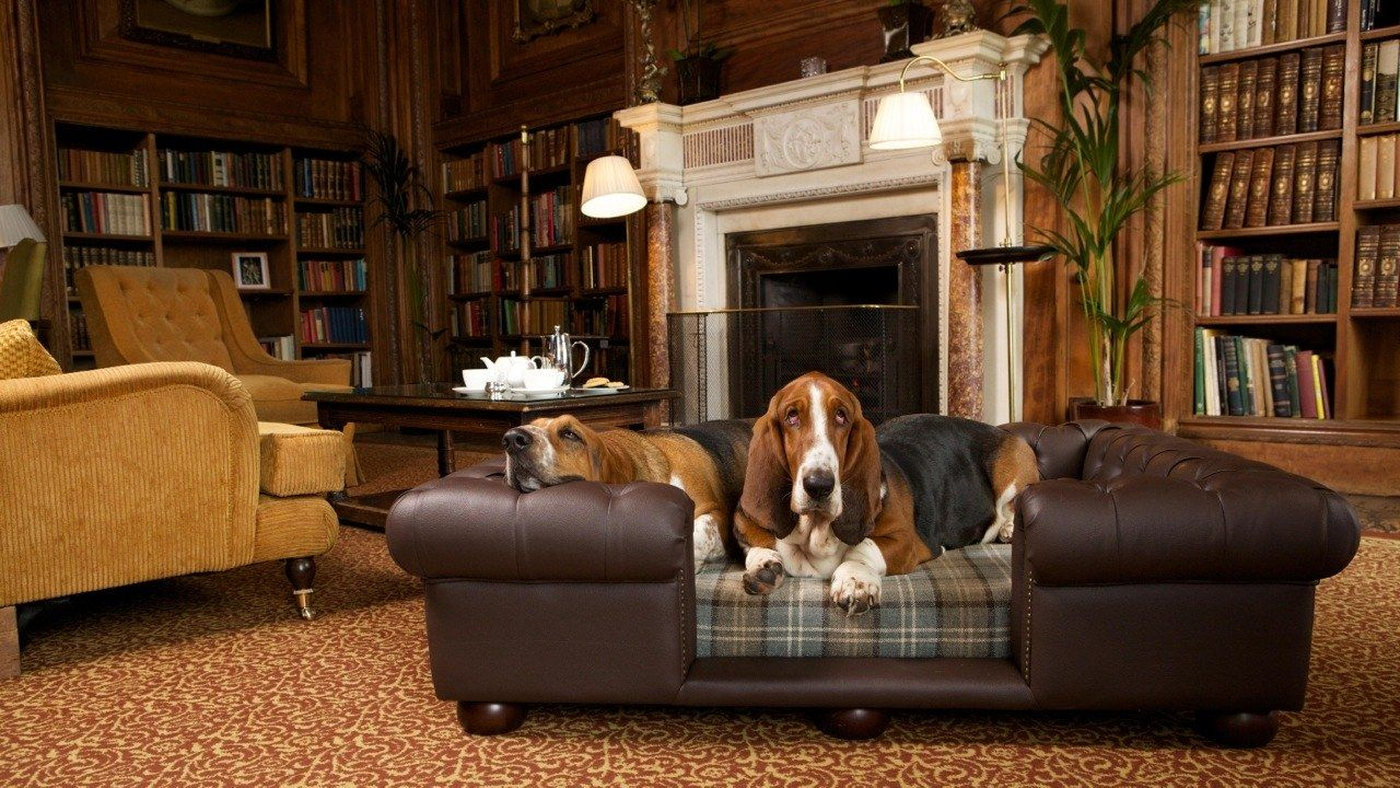 9 luxury hotels with overthetop pet amenities cool dog