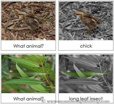 Camouflaged Animals Set 2 Includes 12 Animal Cards In Camouflage And The Same 12 Animal Cards With The Animal Animals Camouflage Preschool Science Activities