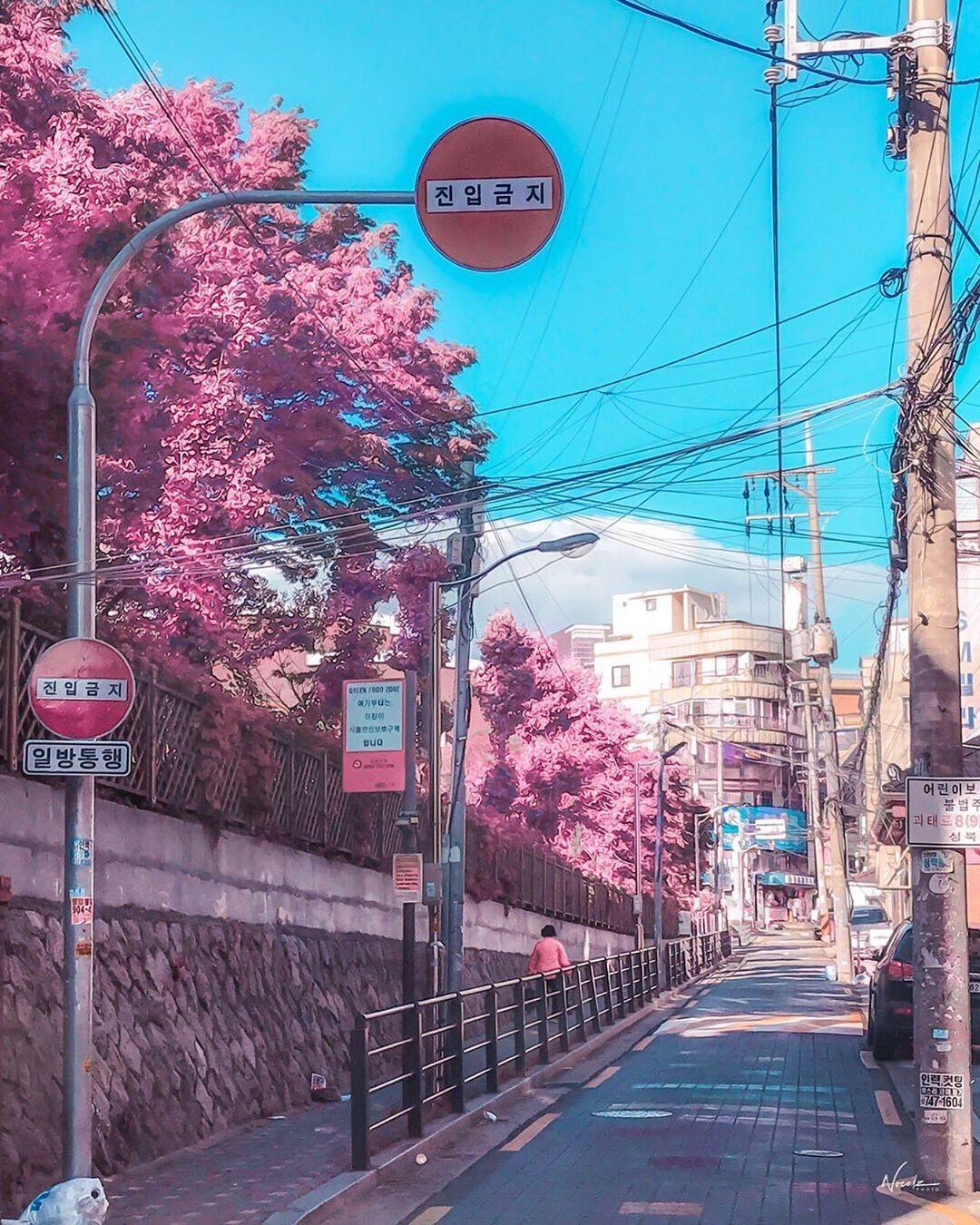 Aesthetic pinks around Seoul, South Korea taken during the