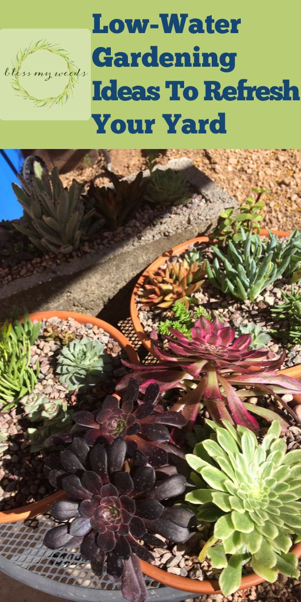 LowWater Gardening Ideas To Refresh Your Yard is part of Low water gardening, Container water gardens, Low water landscaping, Low water, Waterwise garden, Garden - Just because you want to put in a lowwater garden doesn't mean your yard will be lacking in style  In fact, quite the opposite! A waterwise yard can look simply stunning if done in the right way  Stick around for today's look at lowwater gardening    Garden GardenIdeas LowWaterGardeningIdeas