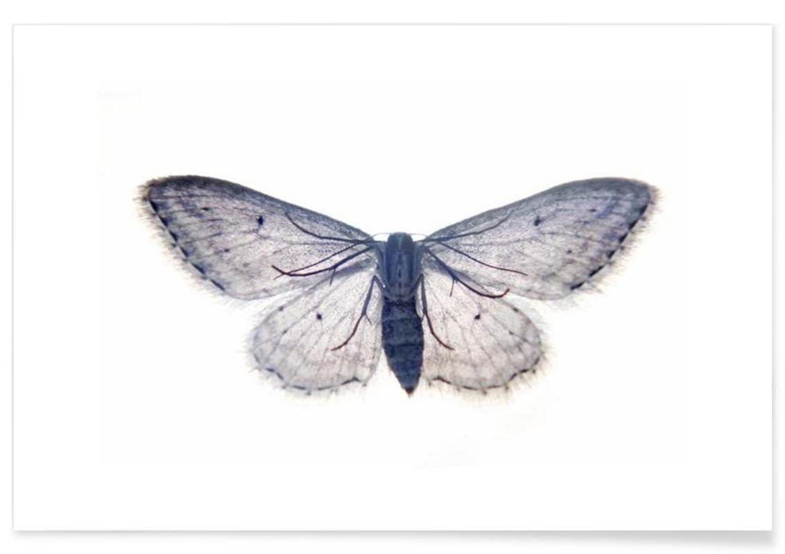 Butterfly in Blue als Premium Poster von cafelab | JUNIQE ...